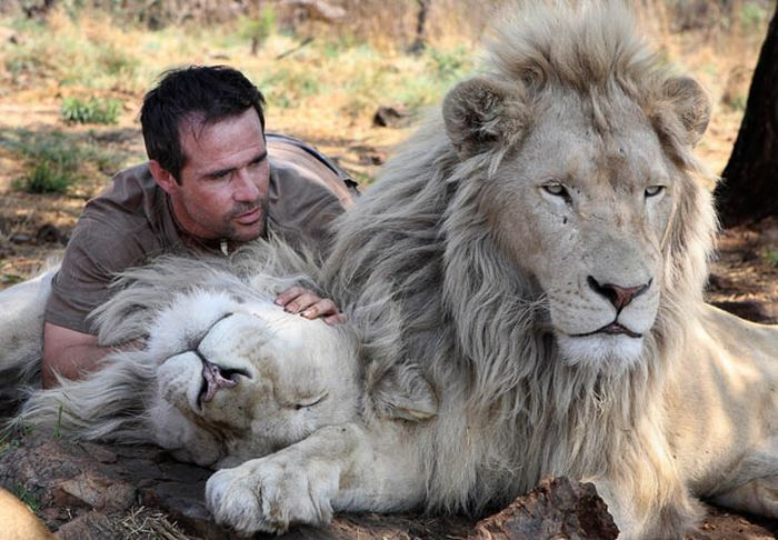 homme-lions