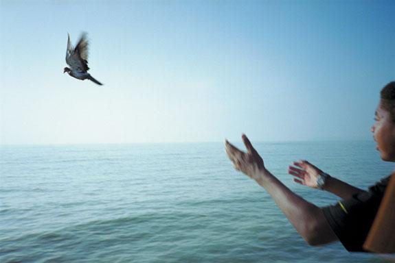 Bird-release-big-copy-575