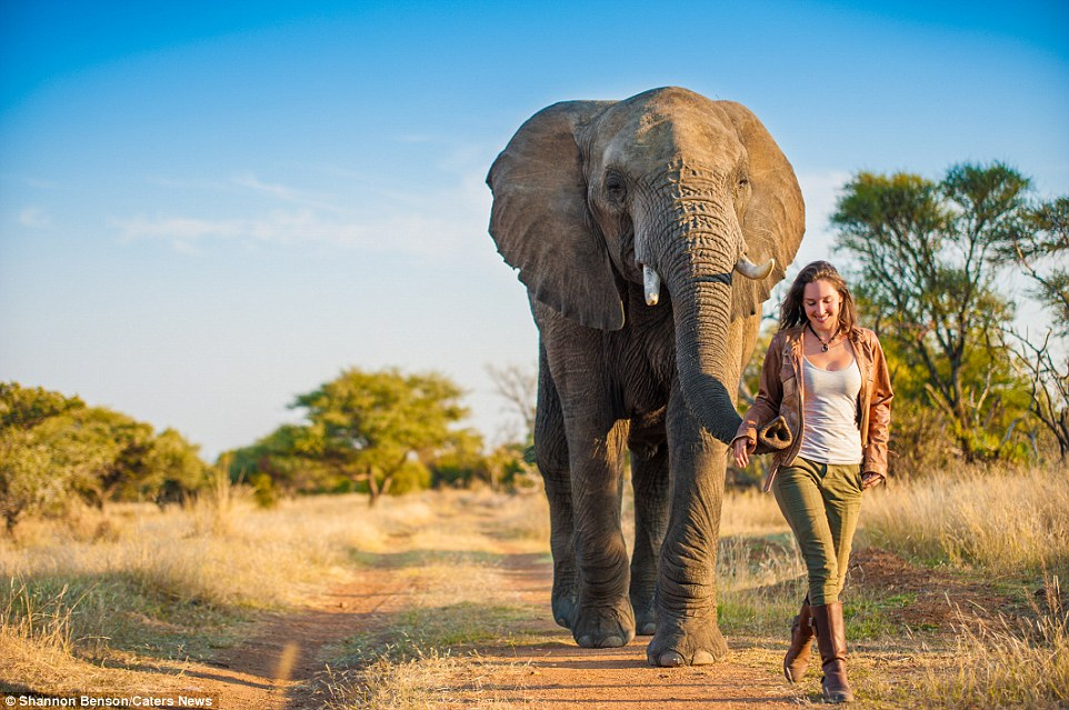 31F3210E00000578-3480156-Shannon_has_admitted_that_she_has_been_chased_by_an_elephant_dur-a-50_1457371547741